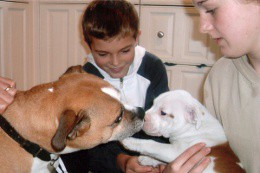 children-introduce-pup-to-dog